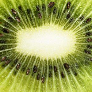 Medulla of a kiwi